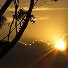 SunBurst by debsphotos