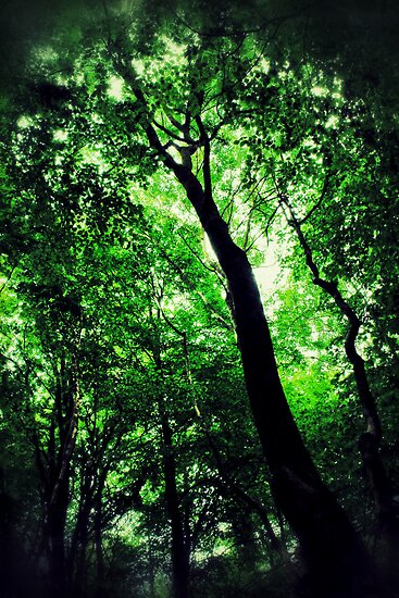 Deep Forest by Ian Hufton