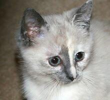 Misty My Sweet Kitty! by Rose Landry