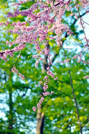 Beautiful Blossoms, Spring Photography by Shutterbug21