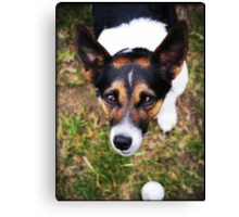 Jessie the Jack Russell Terrier: It's All About the Ball Canvas Print