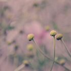 Vintage Flower Buds by Shutterbug21