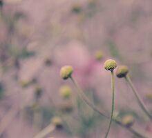 Vintage Flower Buds by Shutterbug21