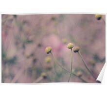 Vintage Flower Buds Poster
