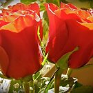 Red Roses by Shulie1