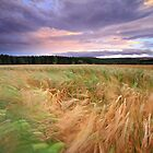 A Windy Evening in the Field. by highlandscot