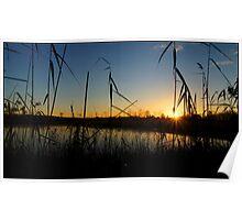 A Swamp sillhouette sunrise Poster