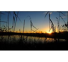 A Swamp sillhouette sunrise Photographic Print