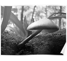 'Craning Her Neck' Mushroom Poster