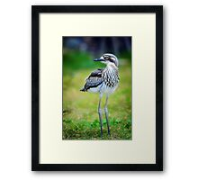 Baby Curlew... Framed Print