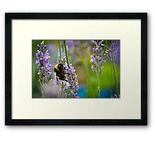 Harvesting Lavender Framed Print