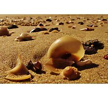 shells Photographic Print