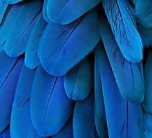 Macaw Feathers iphone case by Elaine  Manley