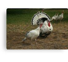 White Turkeys Canvas Print