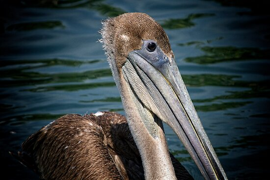 Brown Pelican Profile by Michael  Moss