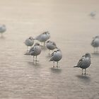 Gulls in Fog by KatMagic Photography
