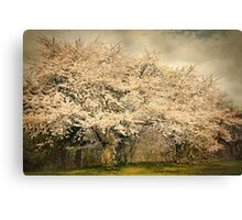 High Park Cherry Blossoms II Canvas Print