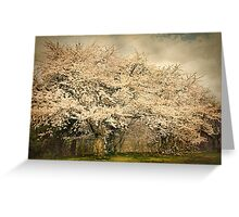 High Park Cherry Blossoms II Greeting Card