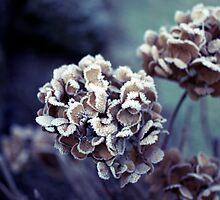 Winter Colours by Eoghansandberg