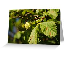 Horse Chestnuts in Autumn Greeting Card