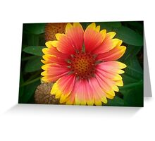 Pink And Yellow Zina Greeting Card