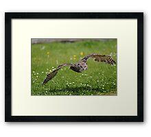 Canadian Great Horned Owl 'Owls' Framed Print
