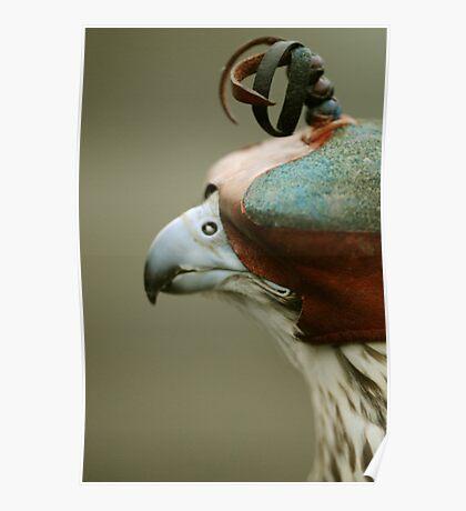 Lugger falcon 'Leyla' Poster