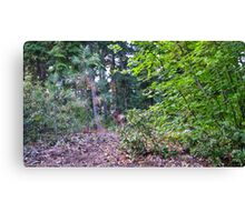 observed or observer? Canvas Print