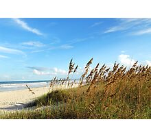 At the Beach - Seaoats Photographic Print