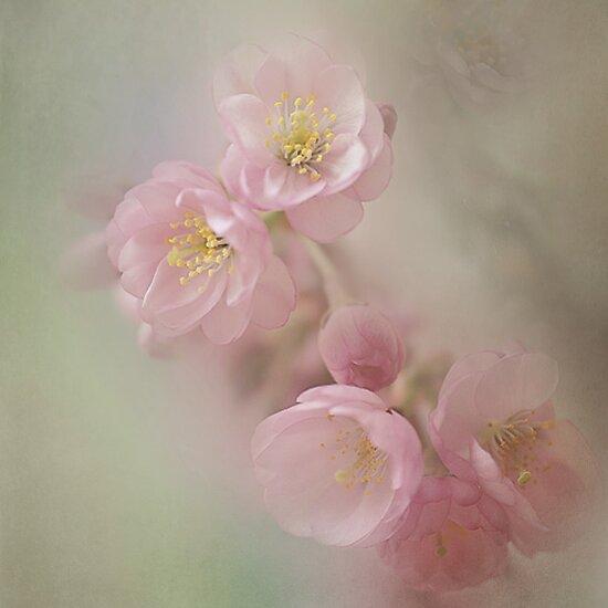 Dreamy beauty by EbyArts