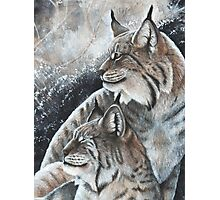 Lynx Pair  Photographic Print