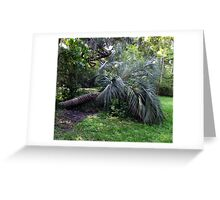 Palm Lies Greeting Card