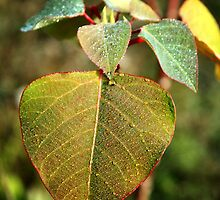 Leaves by Bami