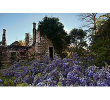 Eurama Ruins - Faulconbridge NSW Photographic Print