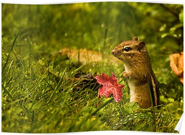 Chipmunk by LudaNayvelt