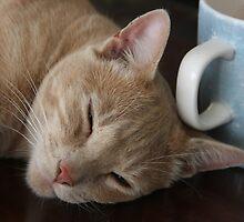 Who Spiked The Coffee? by heatherfriedman