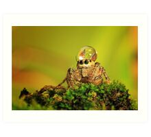 spider, dew and butterfly mating Art Print