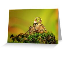 spider, dew and butterfly mating Greeting Card