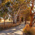 Woodside II, The Adelaide Hills, SA by Mark Richards