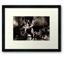 Aged. Framed Print