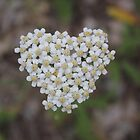 Hearts To You.... Naturally!!!  by Jazzy724