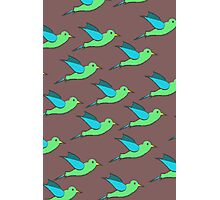Cute Birds Photographic Print