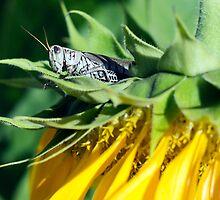 A Flowerhopper by Jfarewell