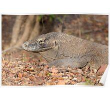 Komodo Dragon - Varanus komodoensis Poster