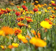 I love Spring! by bindabee