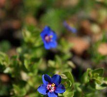 Pretty Blue Flower by bindabee
