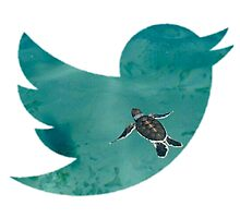 Twitter Turtle Edit by isabellasedits