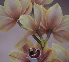 Orchids by Kristina K