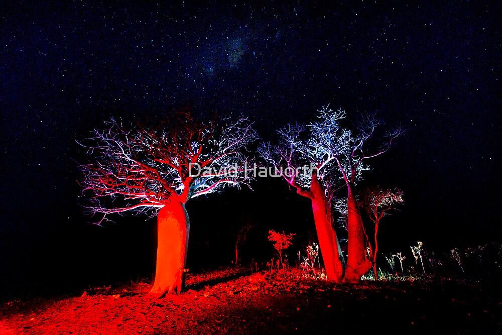 Red Boab by David Haworth