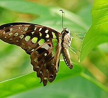 Butterfly Resting on Leaf by Maria Martinez